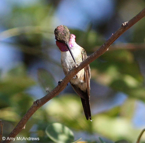 Beautiful hummingbird picture