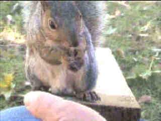 hand-feeding a Squirrel