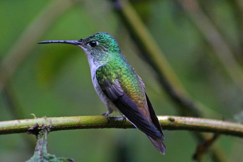 Hummingbird Food Recipe Homemade